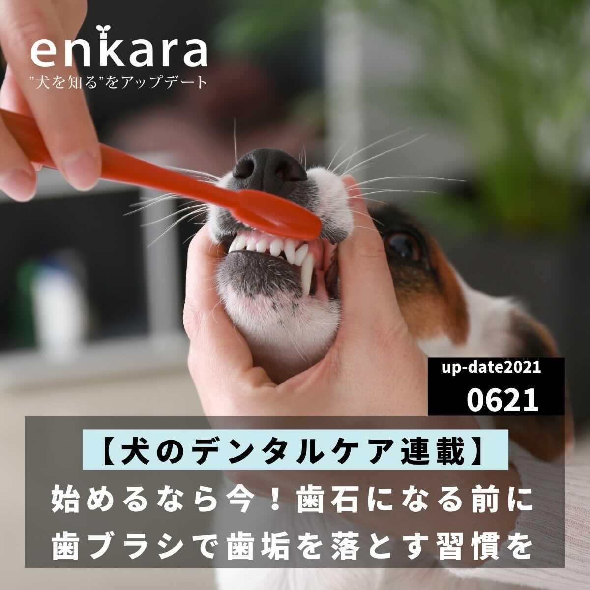 【犬のデンタルケア連載#01】始めるなら今!歯石になる前に歯ブラシで歯垢を落とす習慣を